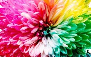 Kleurgebruik kleurenpsychologie